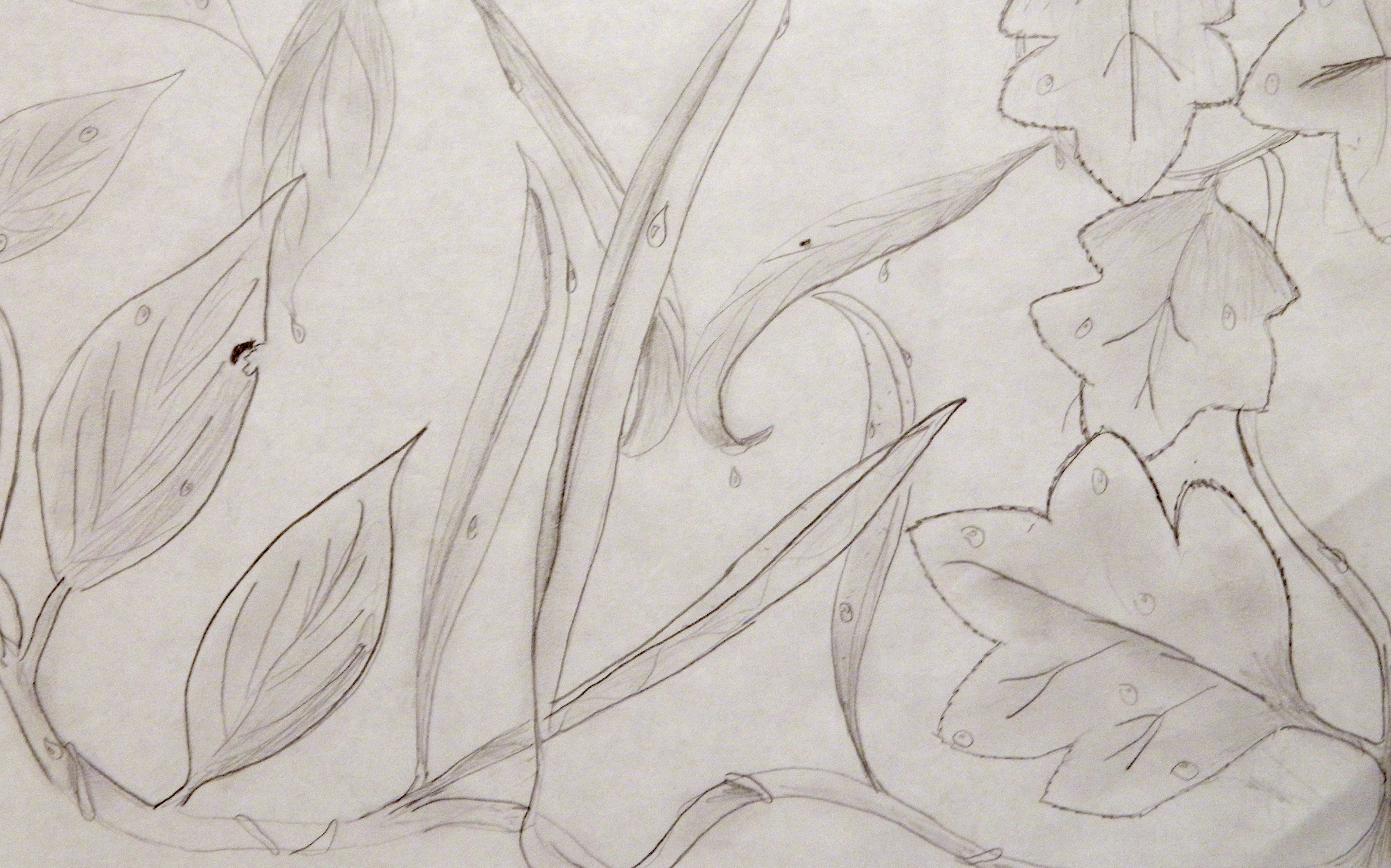 Contour Line Drawing In Art : Cross contour line projects u drawing grand center arts academy
